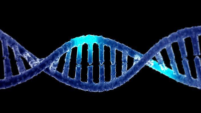 Abb 1: Lokomotiv-DNA der G 1700